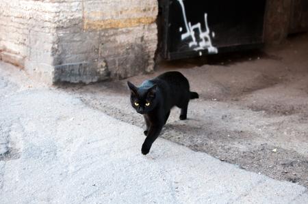 Een zwarte kat heeft je pad gewoon overschreden
