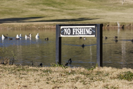No Fishing sign on wooden post with ducks and geese in background