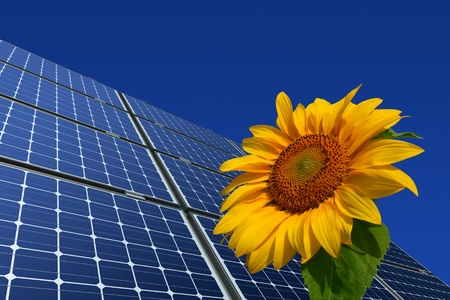Mono-crystalline solar panels and sunflower against a blue background photo