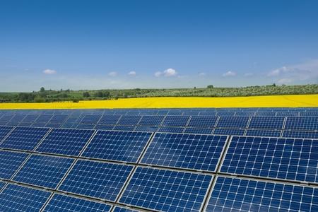 silicio: Los paneles solares en contra de un campo de colza