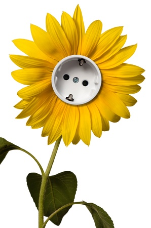 Sunflower with socket photo