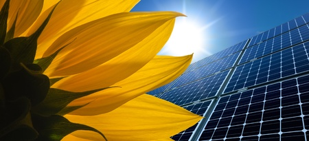 monocrystalline: Solar panels and Sunflower against a sunny sky