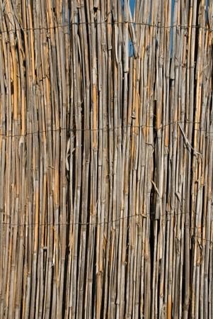 Bamboo wood background photo