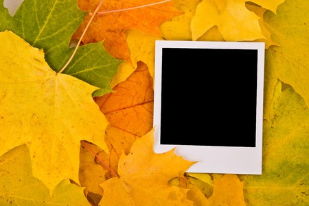 Blank card with soft shadow on the maple leaves background Stock Photo - 7478841