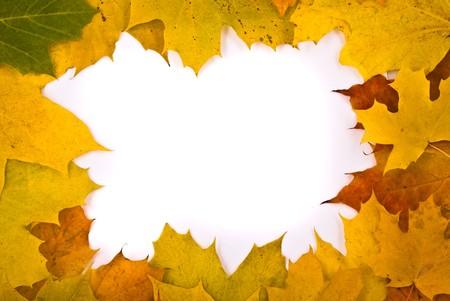 Autumn leaves frame photo