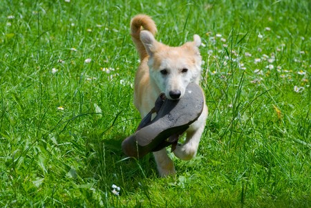 The dog on a grass Stock Photo - 7503627