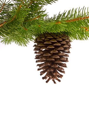Branch with cone isolated on a white background  Stock Photo - 7605698