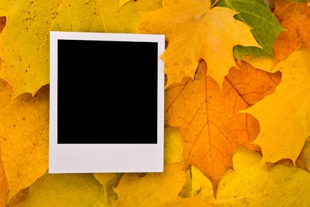 Blank card with soft shadow on the maple leaves background Stock Photo - 7605813