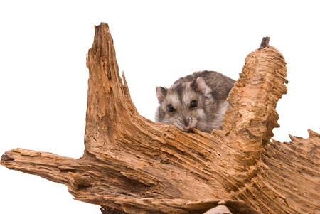 The small hamster sits on a tree. photo