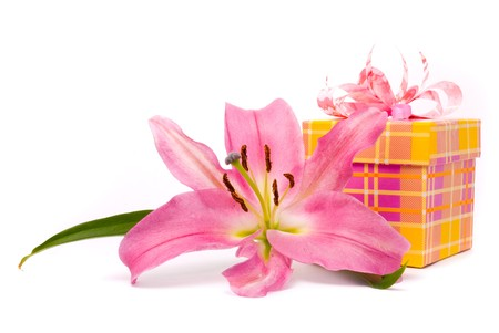 Pink lily and gift box on a white background photo