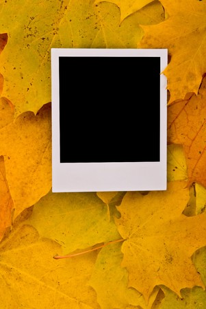 Blank card with soft shadow on the maple leaves background Stock Photo - 7746219