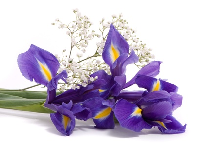 purple iris: Bouquet of a irises