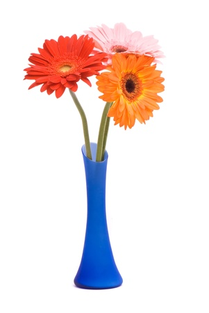 Beautiful gerber flowers in blue vase on white background Stock Photo - 8944249