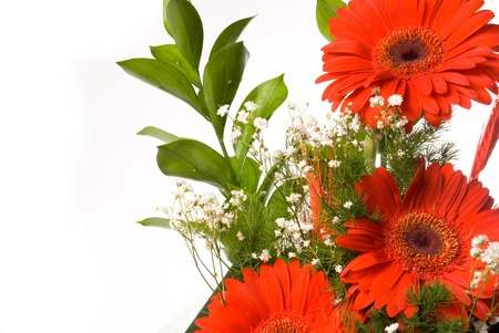 daisy stem: Magnificent bouquet gerbera on a white