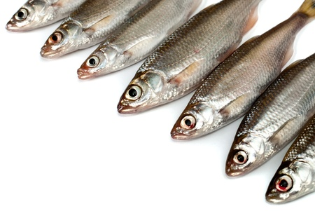 Small fishes background Stock Photo - 12897428