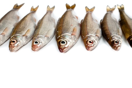 Small fishes background Stock Photo - 12897412
