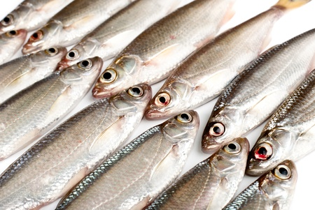 Small fishes background Stock Photo - 12897452