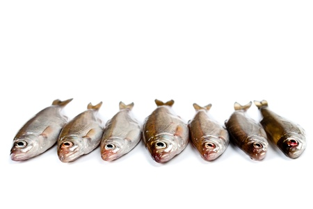 Small fishes background Stock Photo - 13230779