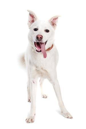perro comiendo: Perro blanco sobre fondo blanco