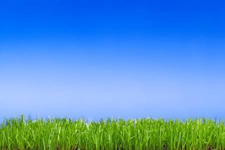 neatly: Neatly trimmed green grass against a blue background Stock Photo