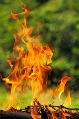 Fire from burning wood photo