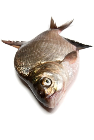Fresh bream fish on a white background photo