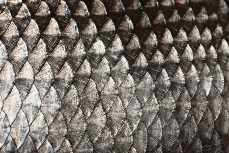 Fish scales background photo
