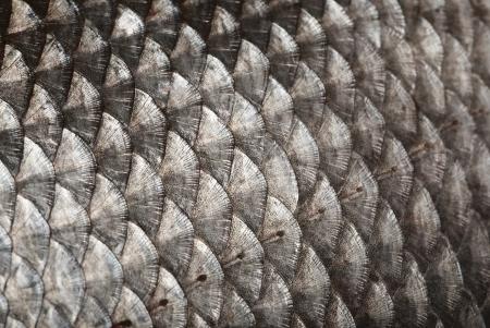 aletas: Escalas de peces de fondo Foto de archivo