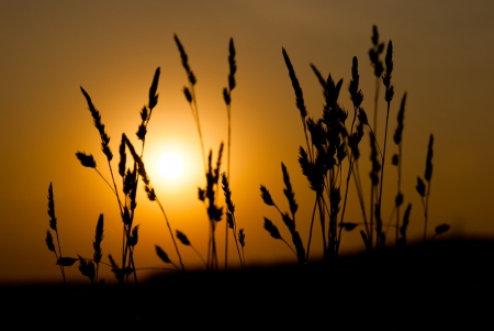 Silhouette of grass on a great summer sunrise background photo