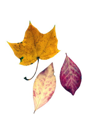 Colorful fall leaves isolated on white. Foto de archivo
