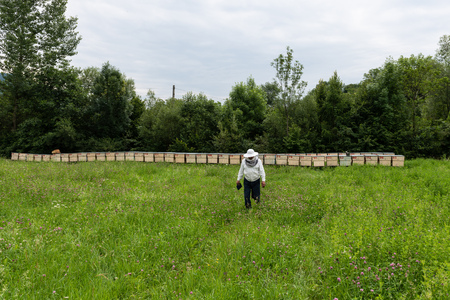 Meadow view of beekeeper with his beehives spread horizontally in a row.