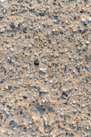 Close-up of a lot of sea shells fragments scattered over sand of a tropical beach.