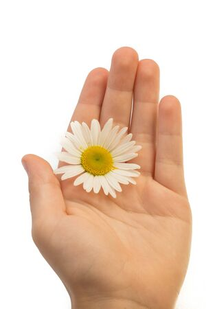 Child hand holding a wild flower isolated on a white background. Mothers Day Concept.