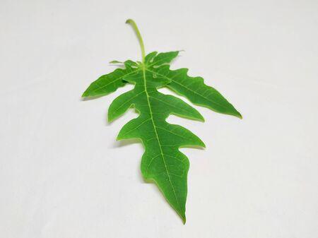 Papaya Leaf Stock Photos.This photo is taken in India By vishal singh