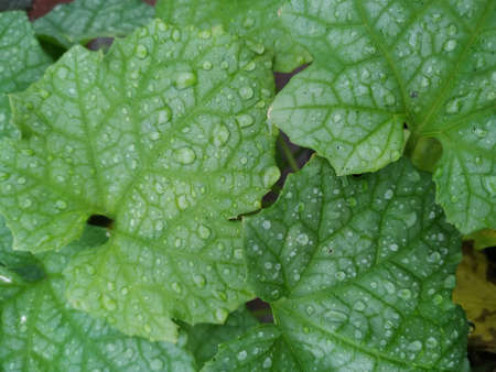 Water droplets on leaves Stock Photo. this photo is taken in india