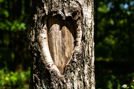 Tree bark in the shape of heart