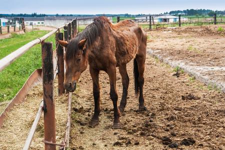 thin big horse Imagens
