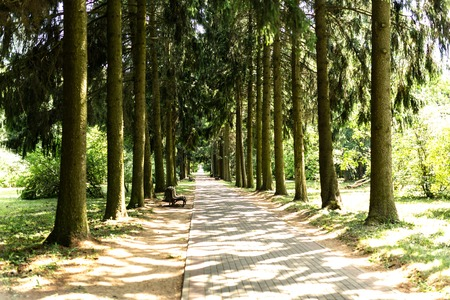 Pine Alley in the Park