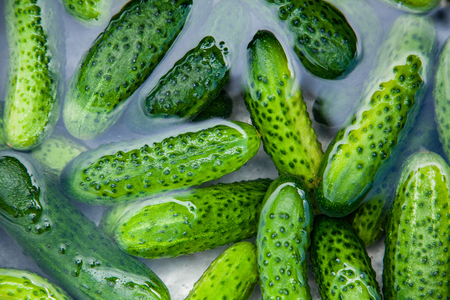 Cucumbers in water, Cucumbers ready for pickling and canning produce