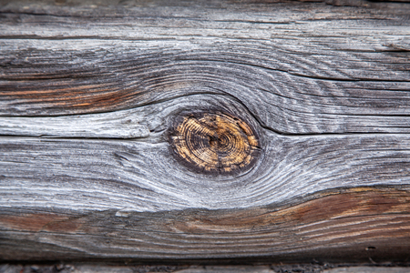 Texture of a wooden log with a knot