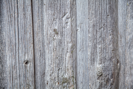 Texture of an old wooden board in gray