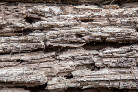 Texture of an old rotten wooden log