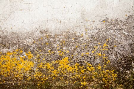Yellow mold on the wall. Fungus on the surface. Toxic mold and fungal bacterium on a white wall. The concept of condensation, dampness, water infiltration, high humidity and breathing problems. Stock Photo