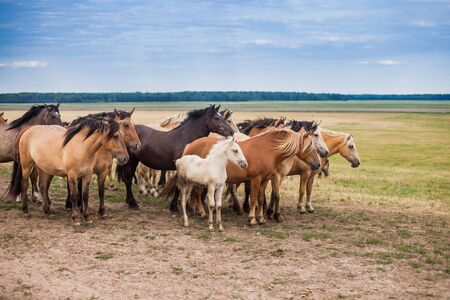 Family of horses grazing in the field