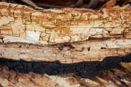 Rotten wood texture. Rotten tree close-up and its rotten fragments. Reklamní fotografie