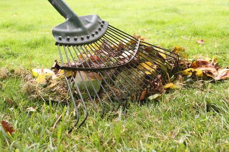 Raking leaves in Autumn 版權商用圖片 - 69109249