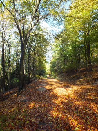 evergreens: Evergreens in Autumn Stock Photo