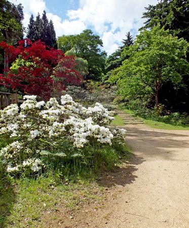 Arbustes en fleurs sur un chemin Banque d'images - 75642494