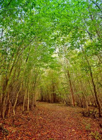 Enchanted Forest Stock fotó