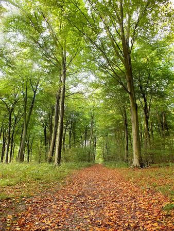 Autumnal Walk Stock fotó